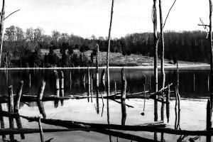 M Creek 6